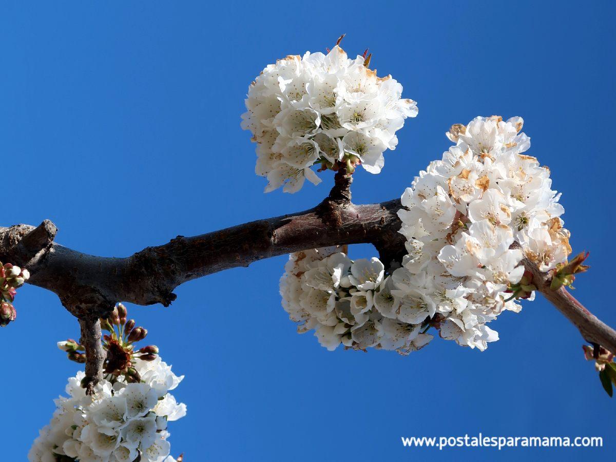 Paseo de los Cerezos en Flor de La Almunia